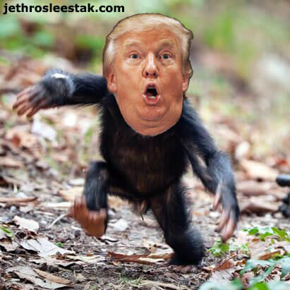 Donald Trumpimal Baby Chimp