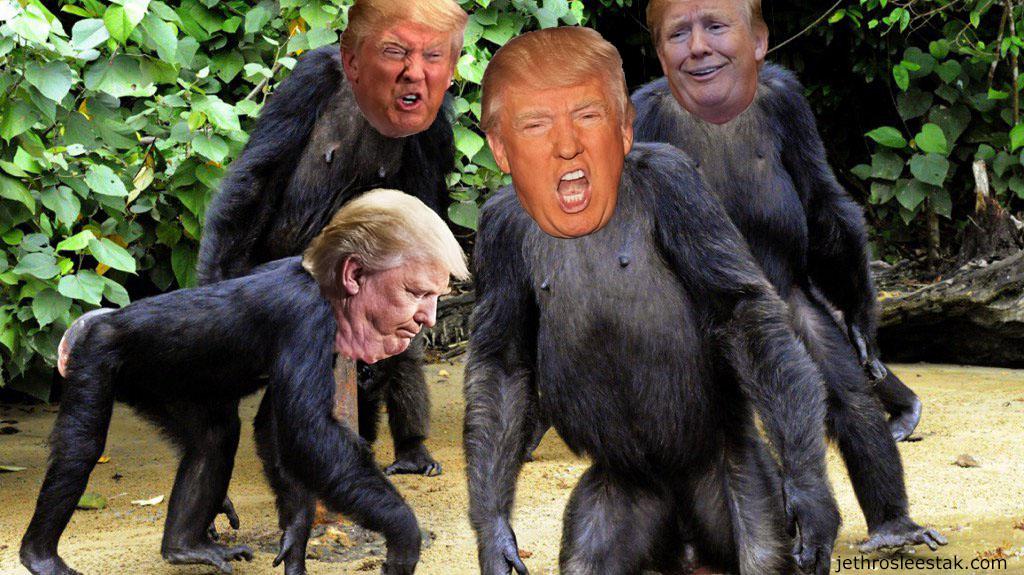 Donald Trumpimal Chimps D