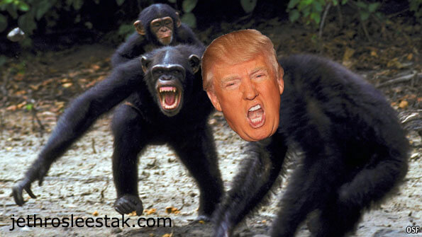 Donald Trumpimal Chimps E