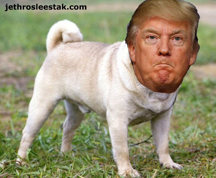 Donald Trumpimal Dog Pug