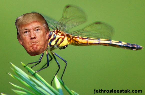 Donald Trumpimal Dragonfly