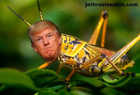 Donald Trumpimal Grasshopper