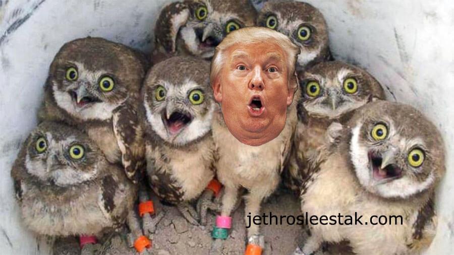 Donald Trumpimal Owls B