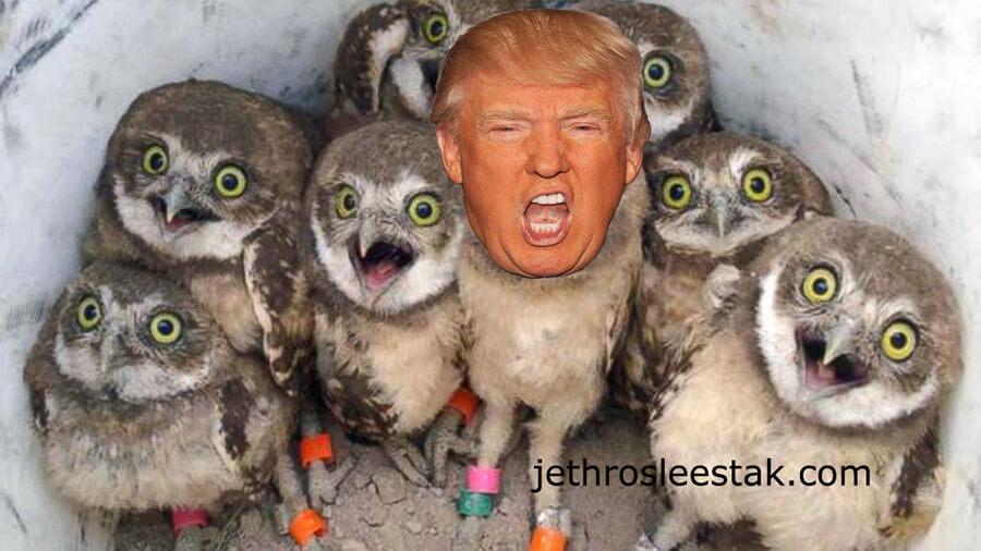 Donald Trumpimal Owls