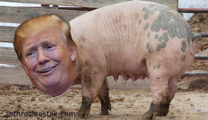 Donald Trumpimal Pigs B