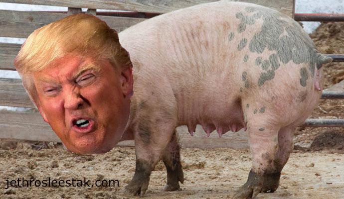 Donald Trumpimal Pigs D