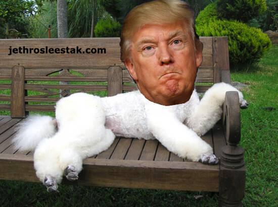 Donald Trumpimal Poodle