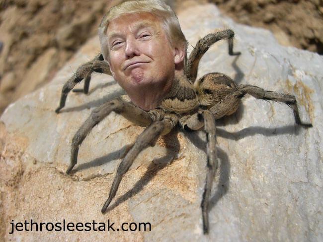Donald Trumpimal Spider B
