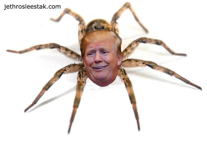 Donald Trumpimal Spider