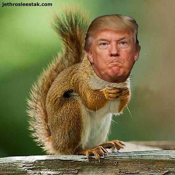 Donald Trumpimal Squirrel