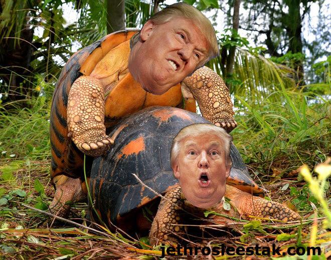 Donald Trumpimal Tortoises Mating
