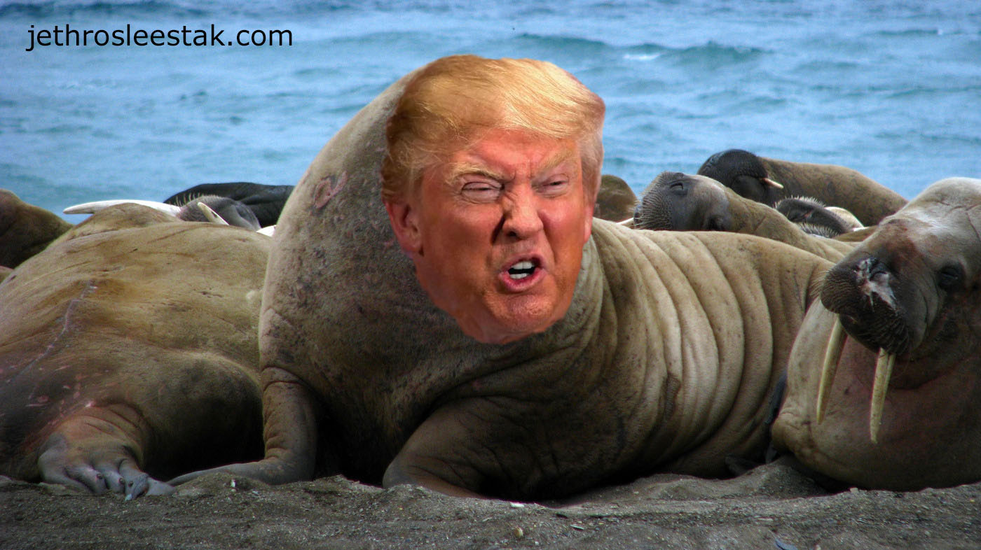 Donald Trumpimal Walrus B