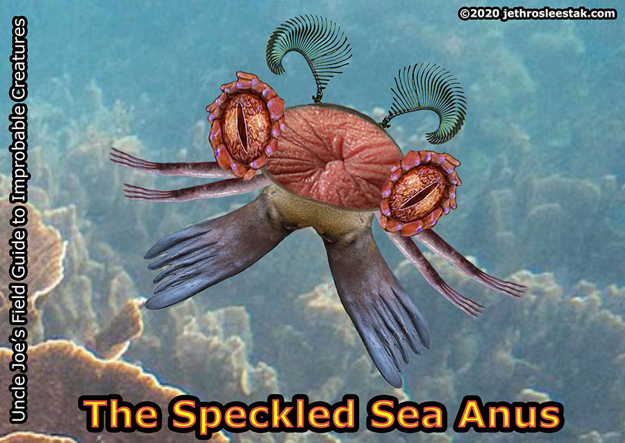 The Speckled Sea Anus Trading Card